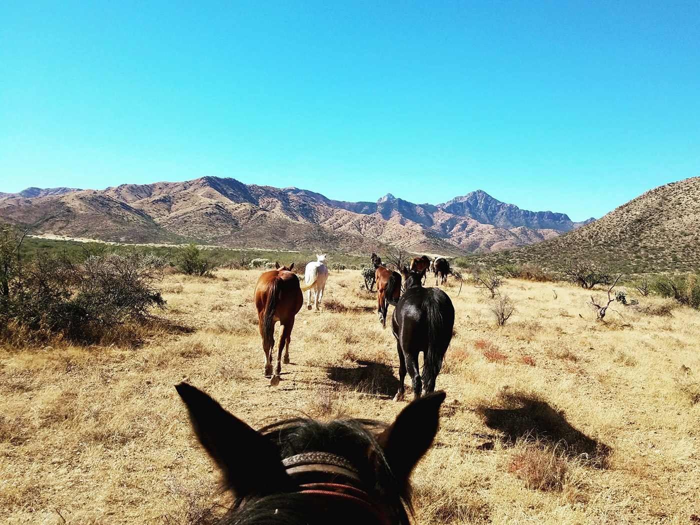 Horses - Dude Ranch Arizona | Elkhorn Ranch